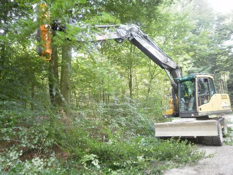 Lichtprofil herstellen Waldwege