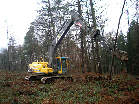 Aufforstungsarbeiten für Neubepflanzung